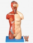 0001479_gda10003_dual_sex_torso_with_open_back32_part