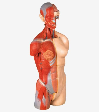 0001480_gda10003_dual_sex_torso_with_open_back32_part