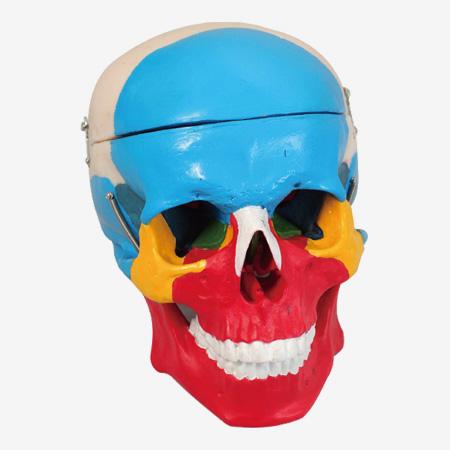 0002095_gda11118_skull_separation_model