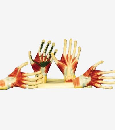 0002111_gda11306_palm_anatomy