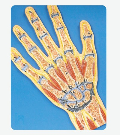 0002114_gda11204_hand_section